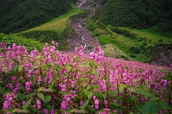 Valley of Flowers Trek Delhi